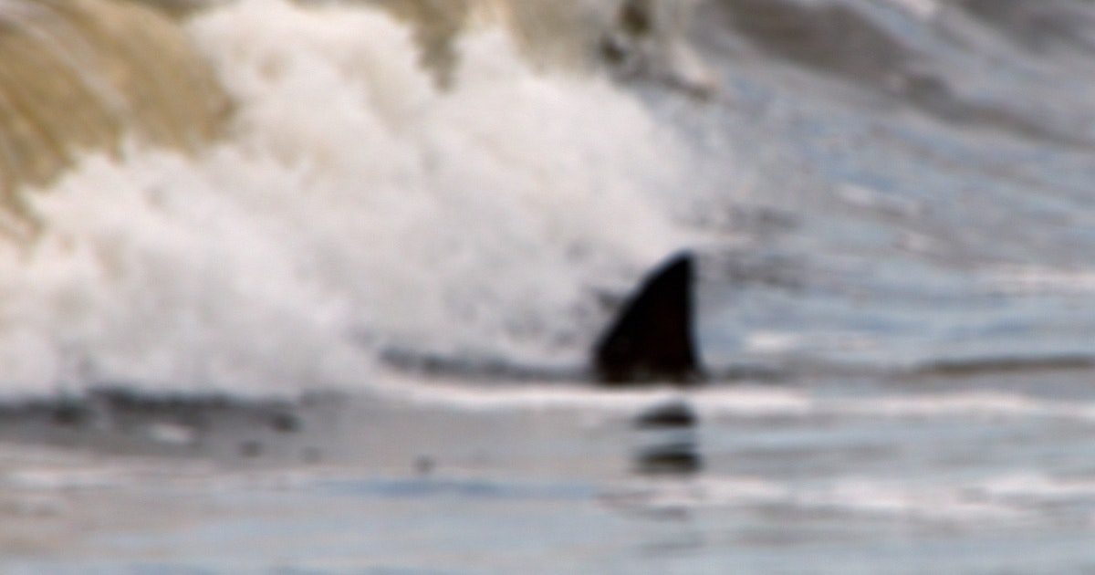 Shark photographed in Lake Superior